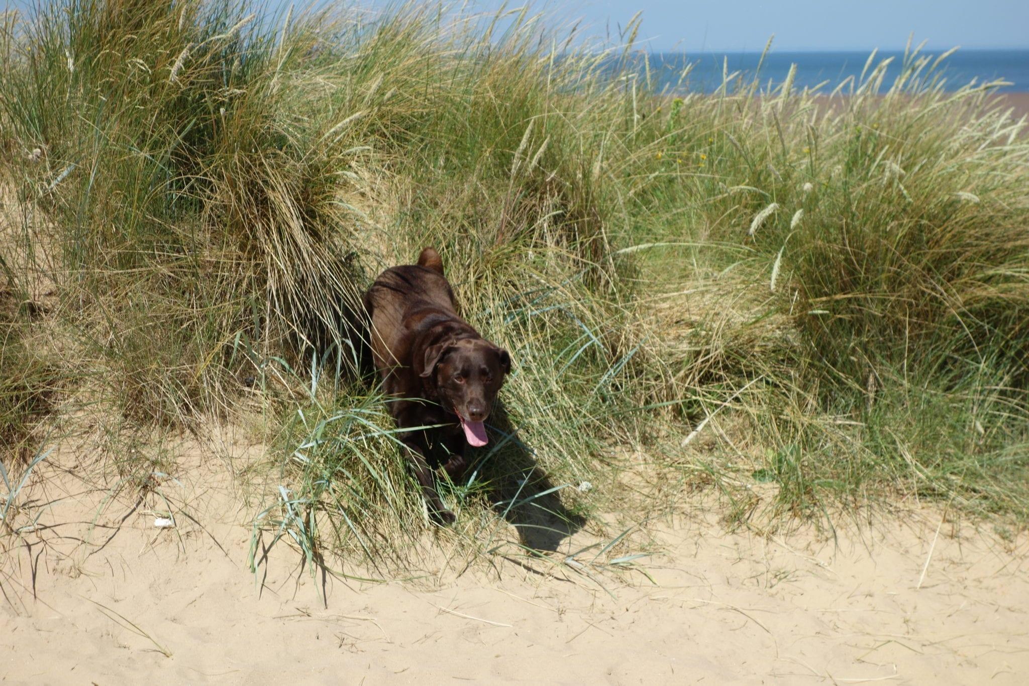 Dog at beach near Caley Hall Hotel,